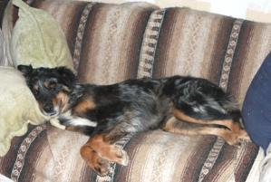 Photo of Kassie, a dog
