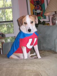 Photo of Teddy, a dog