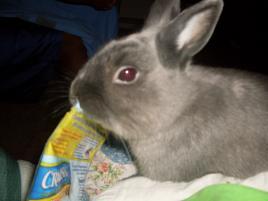 Photo of Storm, a rabbit