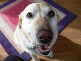 Photo of Gertie, a dog