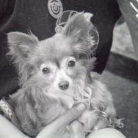 Photo of Rosie, a dog