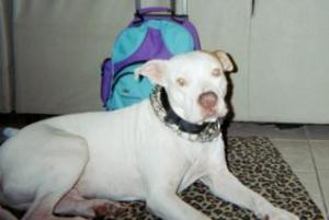 Photo of Chance, a dog