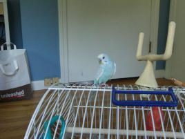 Photo of Cloud, a bird