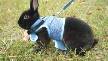 Photo of Eclipse and Nebula, a rabbit