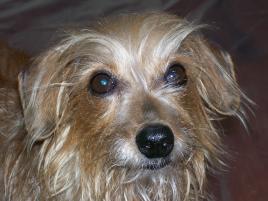 Photo of Oscar, a dog