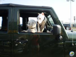 Photo of Ziggy  (AKA-TWIST), a dog