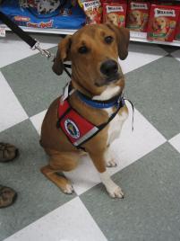 Photo of Crash, a dog