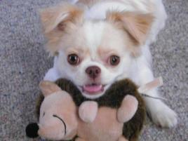 Photo of Isabella, a dog