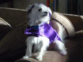 Photo of Chili, a dog