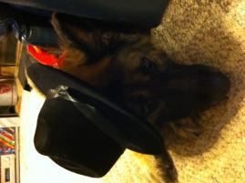 Photo of Gracie, a dog