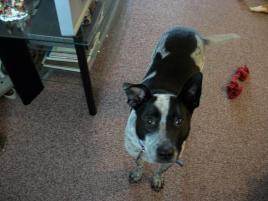Photo of Tilly, a dog