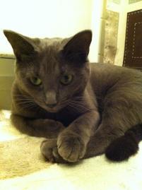 Photo of Genie, a cat