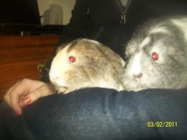 Photo of briony and marigold, a small & furry animal