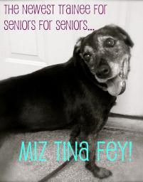 Photo of Tina Fey, a dog