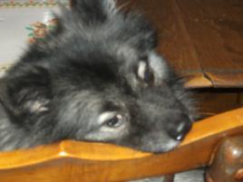 Photo of Yukon, a dog
