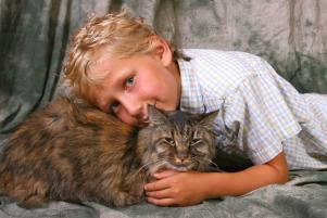 Photo of Sugar Plum, a cat