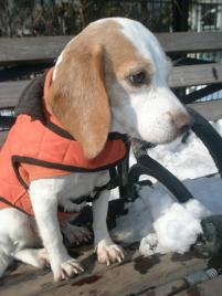 Photo of Daisy (formally know, a dog