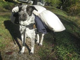 Photo of Grace, a dog
