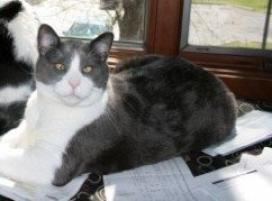 Photo of Adso, a cat
