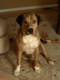 Photo of Tank, a dog