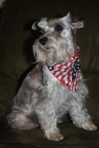Photo of Sparky, a dog