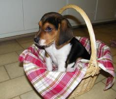 Photo of Baxter, a dog