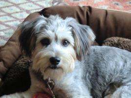 Photo of Beya, a dog