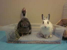 Photo of Peewee and Patch, a rabbit