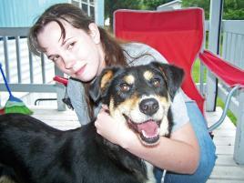 Photo of Steele, a dog