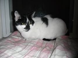 Photo of Grace, a cat