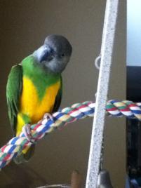 Adopted Bird