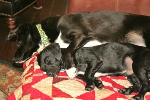 Photo of Jett and Jasper, a dog