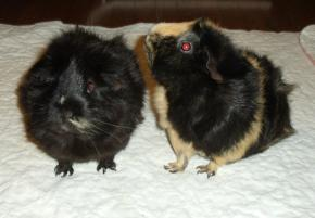 Photo of Harmony and Melody, a small & furry animal