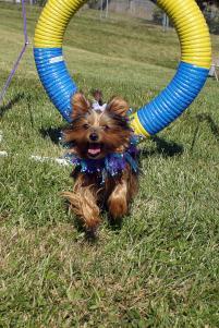 Photo of Little Miss Magic, a dog
