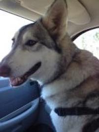 Photo of Juno, a dog