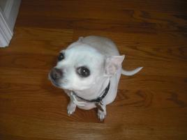 Photo of Tina, a dog