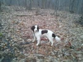 Photo of Patches, a dog