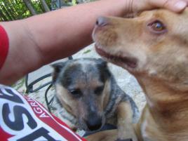 Photo of Sugar Baby, a dog