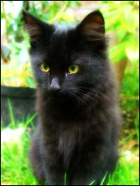 Photo of midnight, a cat