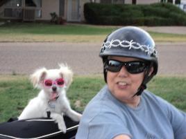 Photo of Toto (aka Effie), a dog
