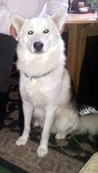 Photo of Storm, a dog