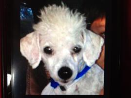 Photo of Rock Star, a dog