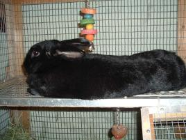 Photo of Onyx, a rabbit