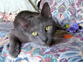 Photo of Buddy, a cat