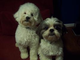 Photo of Bo & Ty, a dog
