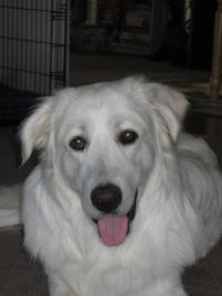 Photo of George, a dog