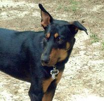 Photo of Argo, a dog