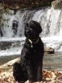 Photo of Sprocket, a dog