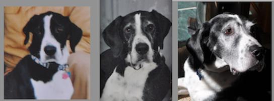 Photo of Eightball, a dog