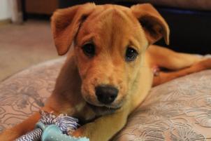 Photo of Wyatt, a dog